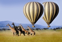 Up Up & Away in My Beautiful Balloon / by Sherri Port