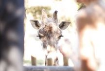 Zoo Catering By Rincon / Weddings and Events at the Beautiful Santa Barbara Zoo