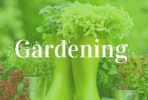 Interesting Gardening Ideas for you! / Ideas. DIY. Tools.Reviews.Tutorials. For gardeners, home poeple and tech guys!