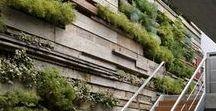 Vertical|Wall Gardens