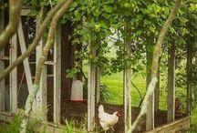 Chickens / by Betty Burchett