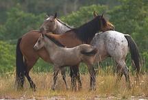 Cavalos... / by Izabel Cristina