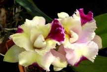 Orquídeas... / by Izabel Cristina