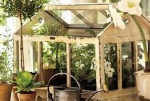Indoor Gardening, Dried Flowers, Floral Arrangements, & Garden Rooms / by Jean Baethge