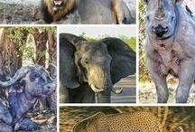África   Africa / Dicas de viagem e fotos do continente africano. África.