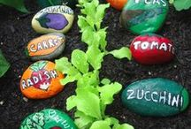φυτά και κήπος / κηπουρική, φυτά