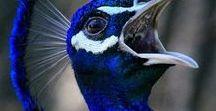 ΜΠΛΕ BLUE