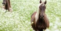 Photography / horse are awsome animals