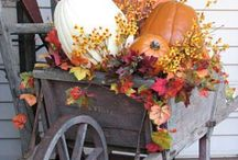 FALL / by Tammie Albin