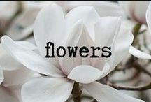 Flowers / by Margaux Tait