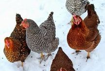 WINTER on the HOMESTEAD / Cold weather animal and plant care, winter recipes, and warm treats.