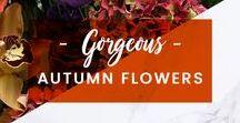 ORCHIDYA // Gorgeous Autumn Flowers