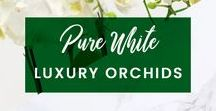 ORCHIDYA // Pure White Luxury Orchids