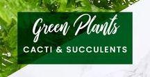 ORCHIDYA // Green Plants, Cacti & Succulents