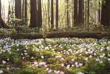 Spring • Kevät