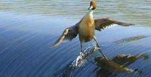 面白い鳥たち