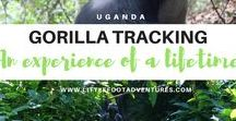 UGANDA / Sharing useful tips, inspiration and advice from Uganda. From travel stories to where the best spots to visit, don't miss anything!