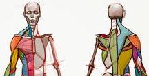 cev_AnatomyBasics / Anatomy