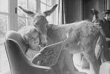 Inglish-Pitinglish bookshelf / infinite resources for our longlife experience as learner-teachers thanks to Inglish-Pitinglish the donkey!