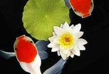 ● Fish