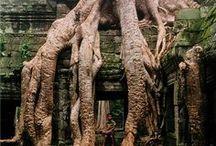 ► Cambodia | កម្ពុជា