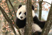 ➶ pandas