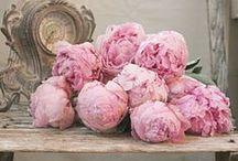 Fleurs / http://dominiquedecoratrice.wordpress.com/