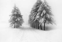 Winter Wonderland / by Doug Ghering