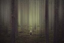 Wild / by Erin Kate Gouveia
