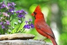 Birds  / by Doug Ghering