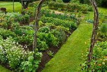 Gerdy's Green Thumb ™ / Greens, Gardens, Growing Grassy, Germinating, Budding, Abundant, Bearing. / by Megan Galvan