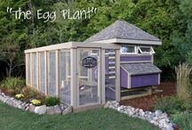 Living on the Land! / Chicken Coops / by Aimee Loker