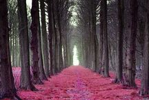 Paths! / by Aimee Loker