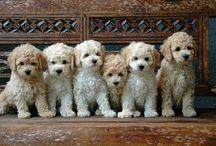 Puppy Love! / Pets / by Aimee Loker