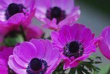 Piękno kwiatów