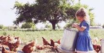 Country Life, Farm, and Homesteading / Country living, gardening, chickens, goats, farm life, homesteading, canning, sustainable living, animals, recipes, and more.
