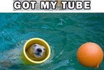 Funny Animal Pics