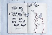 butterflies & things