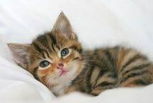 Kitties / by Ashley Sharp