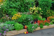 Lawn and Garden / by Marsha Henley