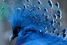 birds / by Marsha Henley