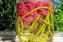 Portfólio / Artista Floral