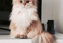 Cuteness of cats