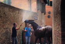 Palio of Siena / Photos of life in Siena