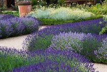 Dream Gardening / by Elaine Gabriel