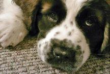 Animals / My true loves / by Caitlynn Belle Shafer
