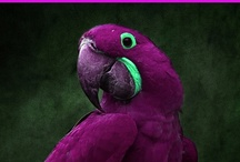 Polly Want a Cracker? / Pretty Birds / by Piper Ritone