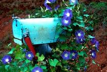 outdoors / by Deanna Smith