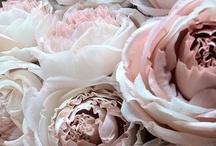Fleurtatious / by Jennifer Norman
