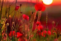 Sunsets / by Jane Spivey